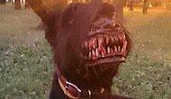 Gece Geç Saatlerde Köpeğini Gezdirmekten Korkanlara Şaşırtıcı Çözüm!
