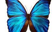 Dünya Üzerinde Görüp Görebileceğiniz En Güzel 6 Kelebek Türü