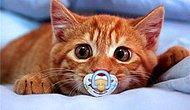 Kedilere Şans Verilse Başarılı Olacakları 17 Meslek