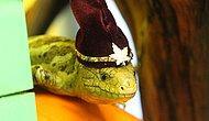 Yeterli İlgiyi Göremeyen Acayip Şekilde Sevimli 29 Hayvan