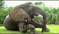 Hayvanlar Aleminde Güzel Dostluklar