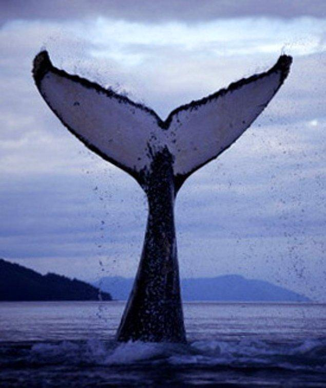 12. Yüzme Paletleri ve Balinalar