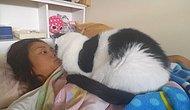 Kedi Seven Bir İnsana Aşık Olmanız İçin 21 Sebep