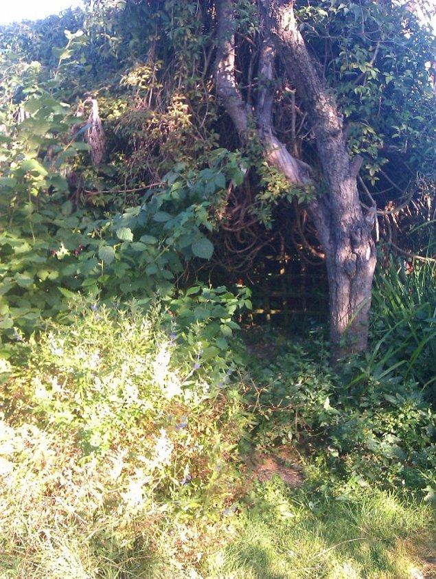 İkili ilk olarak projeyi nereye yapacaklarına karar verirler. Evin arka bahçesinde unutulmuş bakımsız bir köşedir.