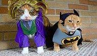 Kostüm Partisine Hazır Olan Kediler