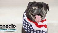 2016 ABD Seçimlerine Aday Köpek