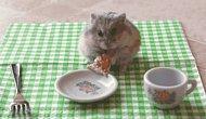 Birbirinden Sevimli ve Obur Hamster Kardeşlerimizin GIF'leri