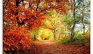 İçinde Kaybolacağınız Sonbahar Manzaraları