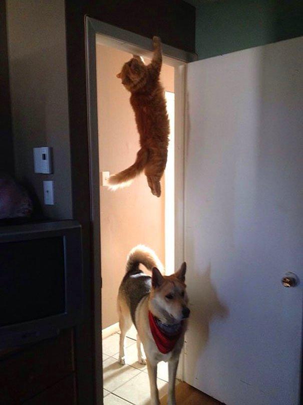 ''Ребят, тут кошка мимо не пробегала?''
