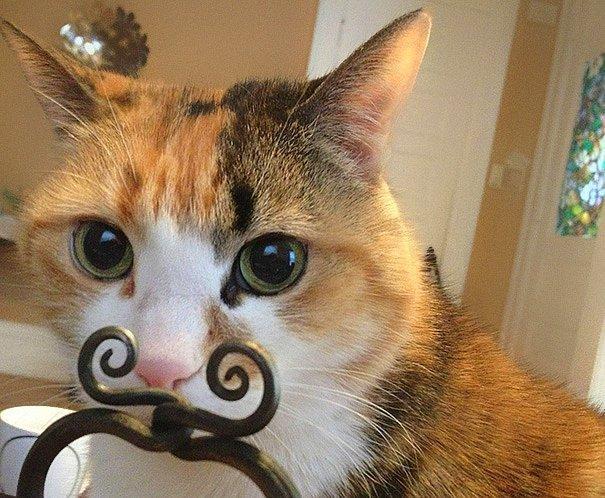Новая мода на кошачьи усы