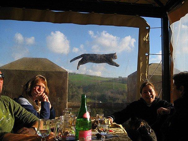 Летят перелетные ... кошки!!