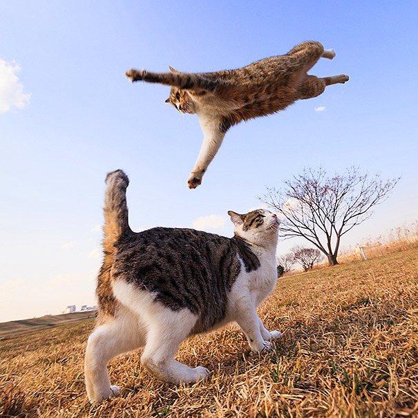 Кто сказал, что кошки не умеют летать?