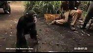 Maymuna Silah Verirsen O Da Seni Maymun Edermiş...