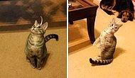 """""""Ne Koydunuz La Başıma!"""" Başındaki Etikete Anlam Veremeyen Kafası Karışık Kedi"""