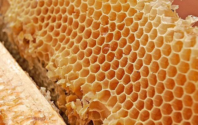 Bal arılarının en büyüğü Himalaya Bal Arısı, kabilelerin topladığı halüsinojenik bir bal yapar.