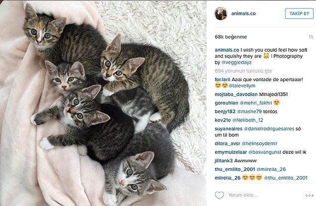 5. Takip ettiğiniz sosyal medya hesaplarına bir bakın, çoğunun hayvanlara ait, hayvan resimleri, videoları, vs. paylaşan hesaplar olduğunu görürsünüz.