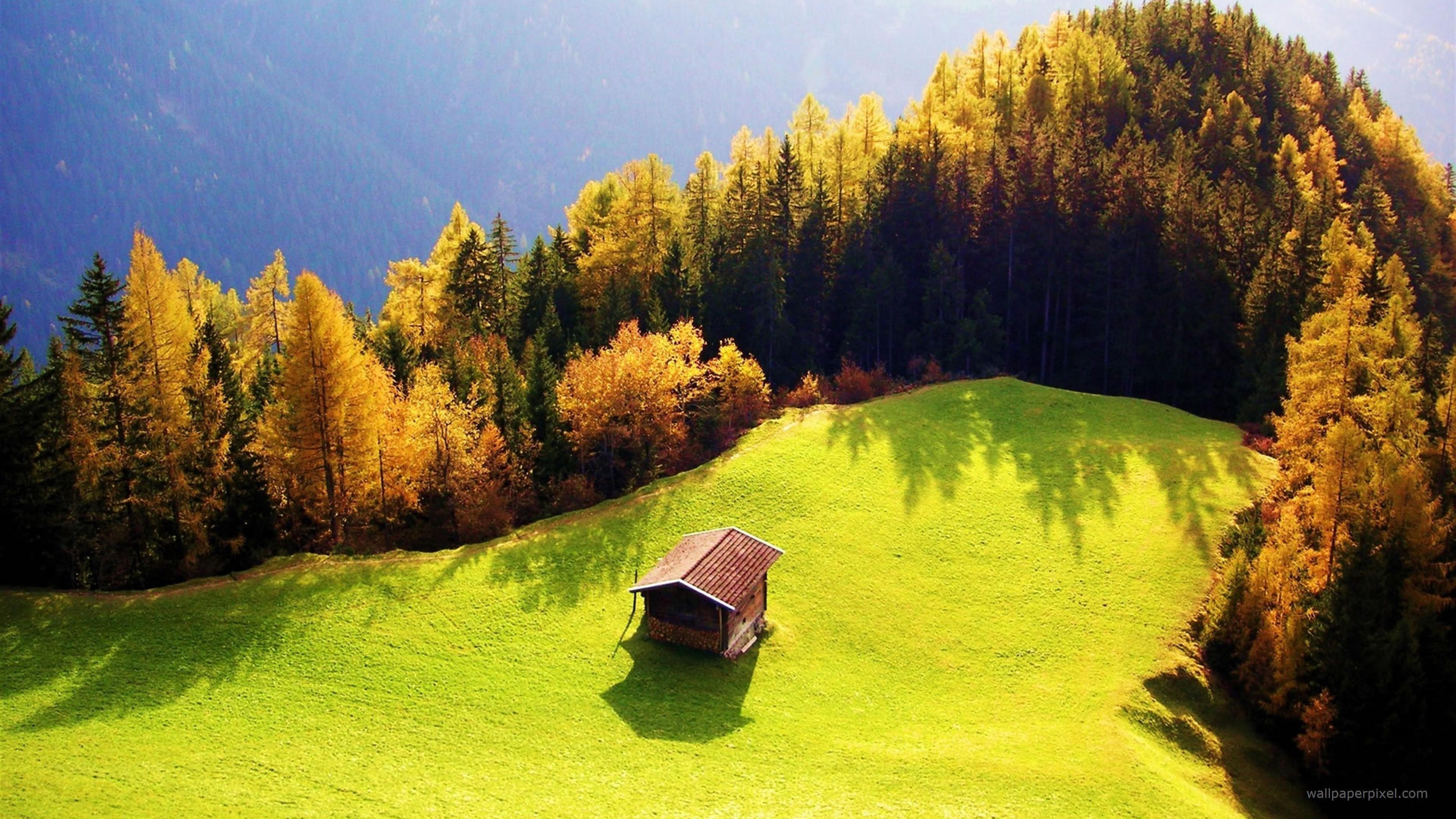 гора ели деревья дом mountain ate trees the house скачать