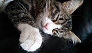 Kedilerin En Miskini Fırıldak İle Tanışın