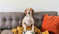 Sahibinin Sözünden Asla Çıkmayan İnstagram Fenomeni Sevimli Köpek Maddie'nin Birbirinden Şahane 27 Hali