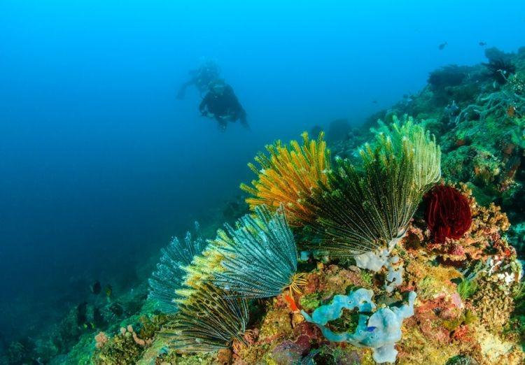 фото риф океан