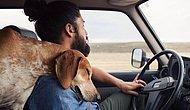 Hayvan Dostunla Yolculuk Etmen İçin 10 Sebep