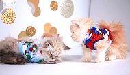 Kış Geliyor: Kedinize Basit Bir Şekilde Şık Süveter Yapmak İster misiniz?