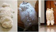 Yastık Niyetine Kullanabileceğiniz 15 Pofuduk Kedi!