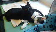 Light Side'ı En İyi Şekilde Temsil Edip Göğsümüzü Kabartan 16 İyilik Yanlısı Kedi