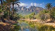 Dünya Üzerinde Başka Bir Gezegen: Socotra Adası