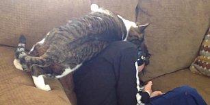 Küçük Dostunu Bir Türlü Rahat Bırakmayan Minnoşluğu Üzerinde Olan Kedi