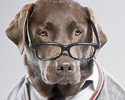 Gözlük, çerçeveli mercek ya da merceklerden oluşan bir aksesuar, bir araçtır.