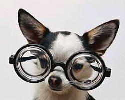 görüşünüze ve görünüşünüze yansısayan detay : gözlük
