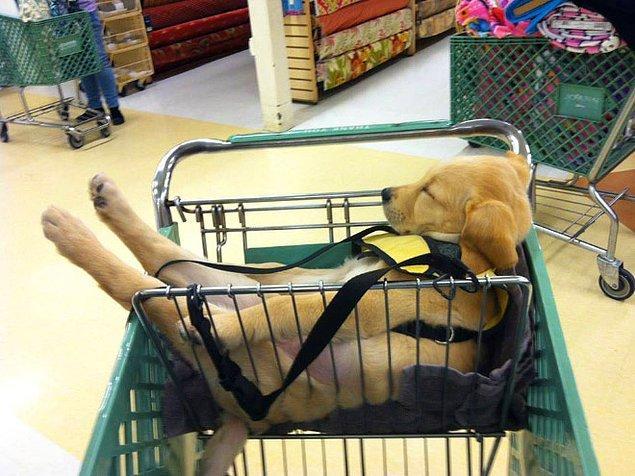 В корзине супермаркета.