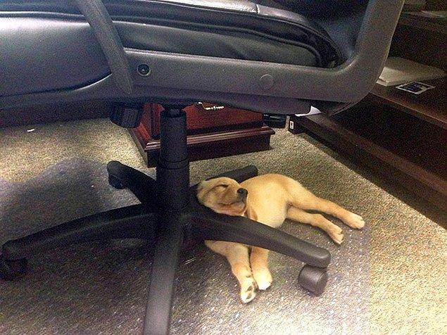 Под офисным стулом.