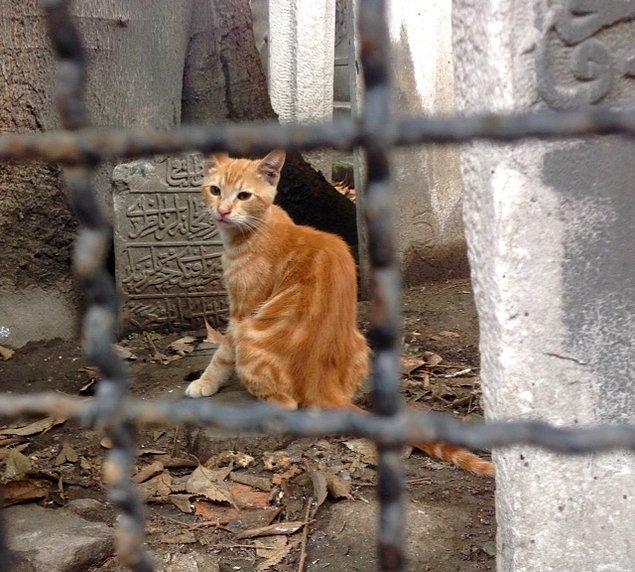 Toprağa patilerini değdirebilen çok az şanslı var. Park ve mezarlık kedileri nispeten daha şanslı.