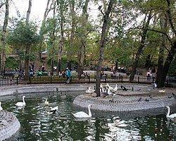 Kuğulu Park'ta kuğulara simit atın