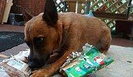 """""""Gülü Bir Gün Köpeğini Her Gün"""" Seven Gerçek Köpekseverlerin 24 Ayırt Edici Özelliği"""