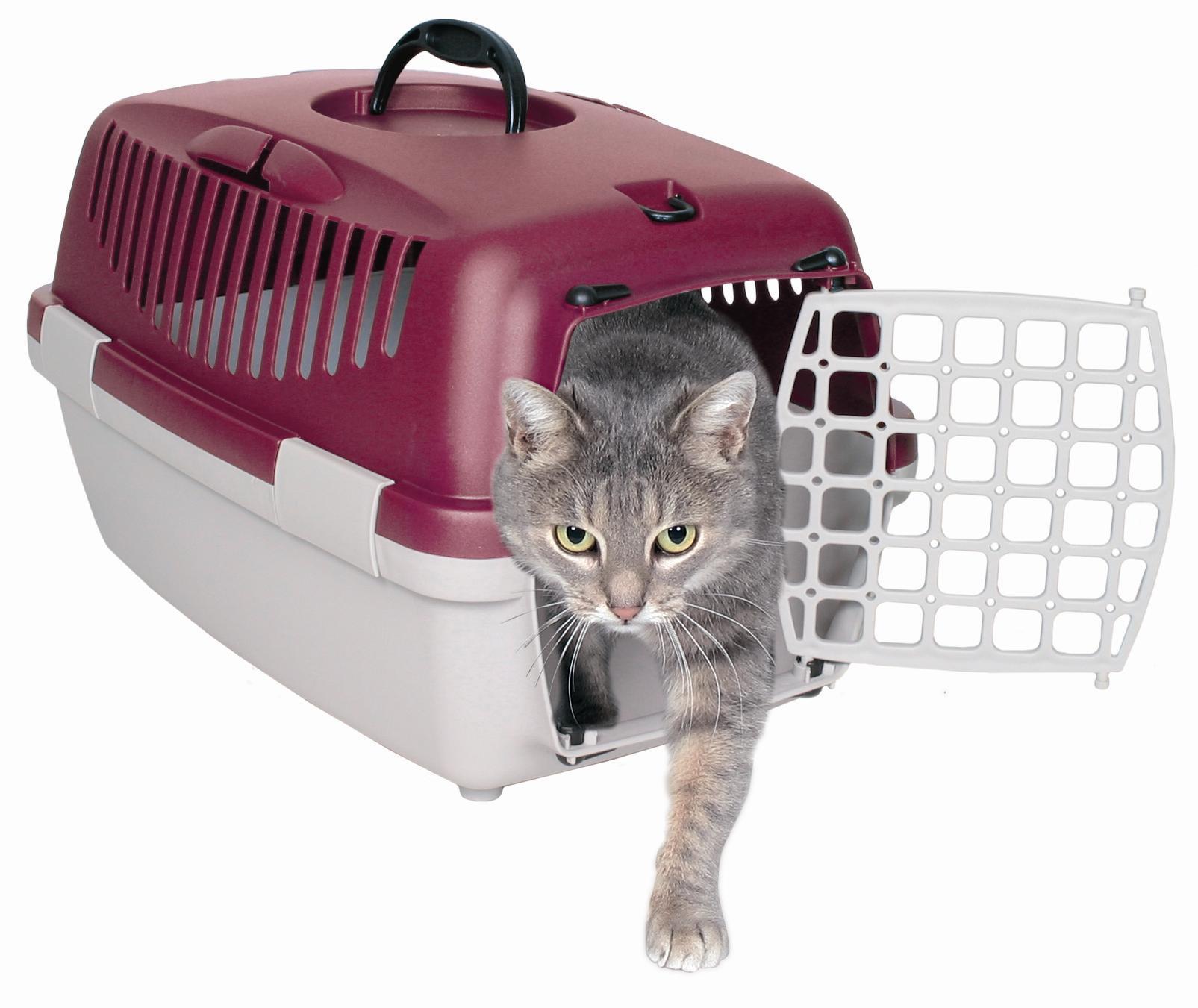 Kedinizin taşıma çantasını ile ilgili görsel sonucu