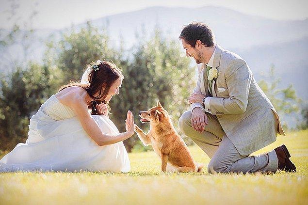 Фотография, где собака «дает пять» невесте безусловный победитель.
