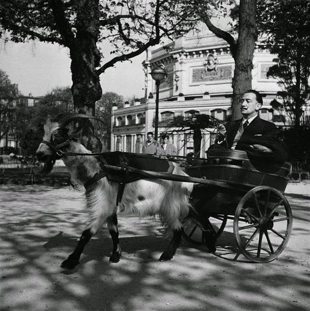 1. Salvador Dali, bir keçi tarafından çekilen küçük faytonu sürerken, 1953.