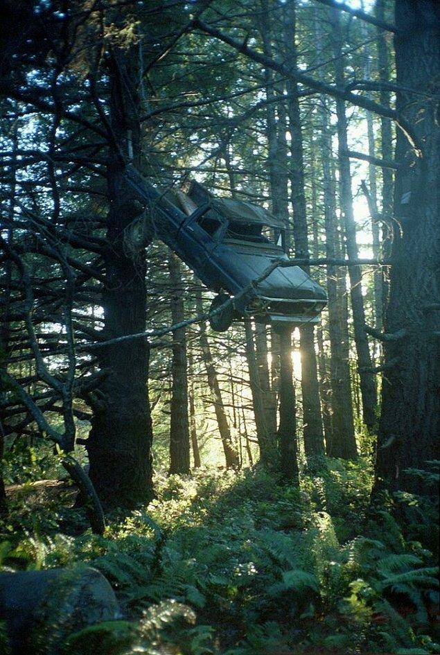 Как пикап оказался на дереве?!