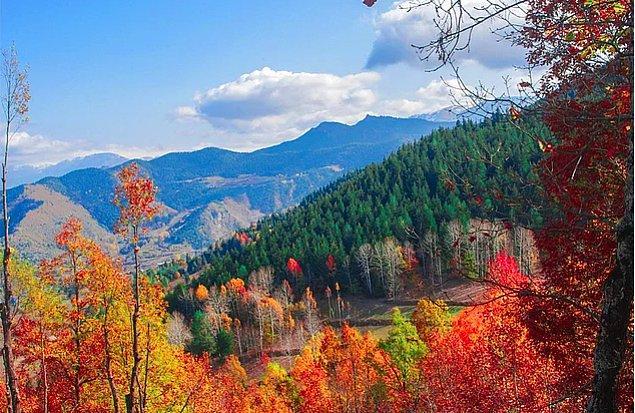 7. Bölgedeki ormanların gelecek nesillerini