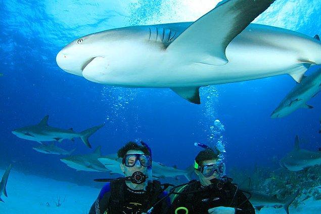 54. Bahamalar'da köpek balıklarıyla yüzün.