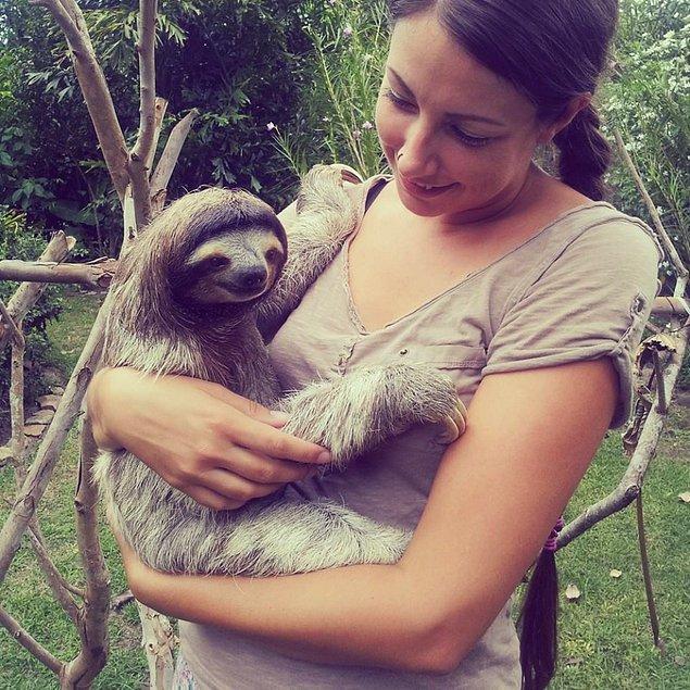 65. Kosta Rika'da bir tembel hayvanı kucaklayın.