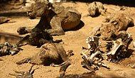 Kan Donduran Bir Hikaye: Açlıktan Ölüp Mumyalaşan Hayvanların Bulunduğu Hayvanat Bahçesi