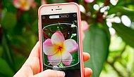 Bitkilerin ve Çiçeklerin Shazam'ı: Pl@ntnet