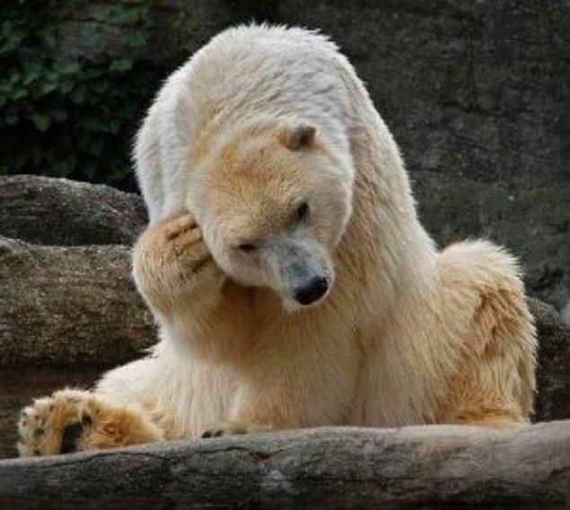 Вообще-то белые медведи водятся на севере. Что же я делаю в этой жаре...