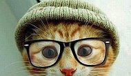 Kedilerin komik olduğu kadar tuhaf halleri de olduğunu gösteren 20 eğlenceli kedi