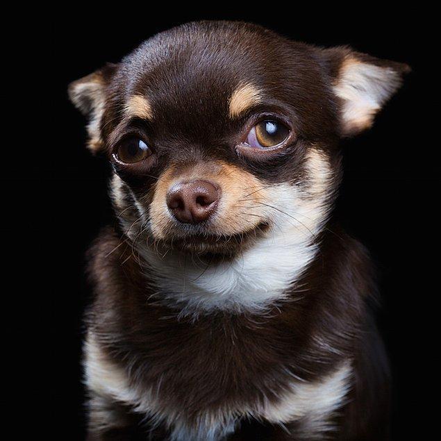 Собака – тоже личность: необычные снимки, раскрывающие души животных