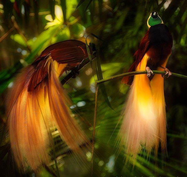16. Cennet Kuşu